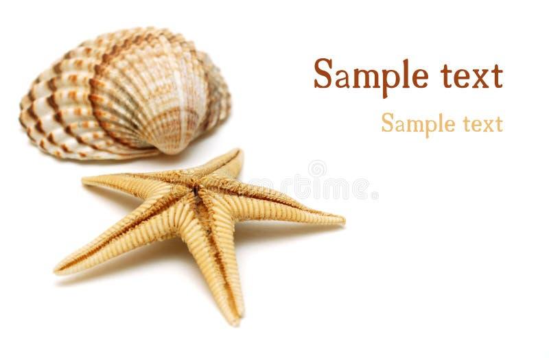 Shells op wit stock afbeeldingen