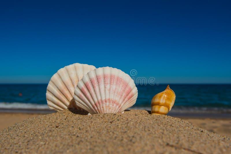 Shells op zandig strand met blauwe hemel en overzees stock afbeeldingen