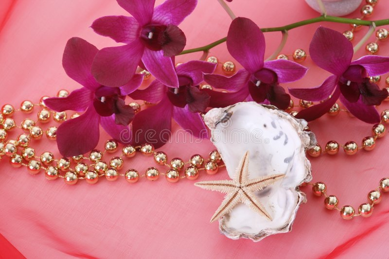 Shells and orchid royalty free stock photography