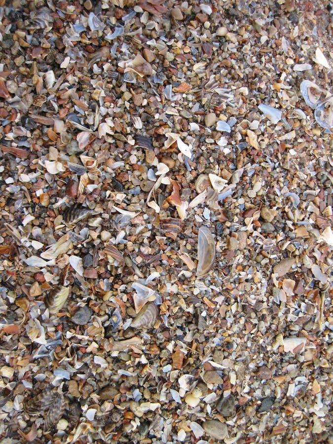 Shells pattern royalty free stock photography