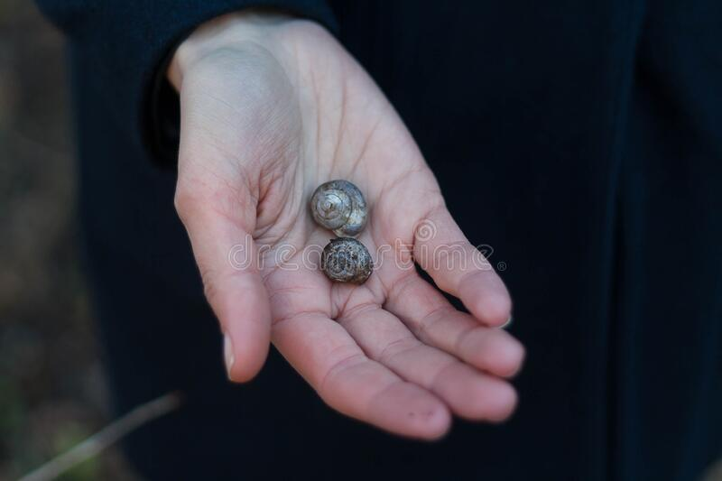 Download Shells On Person's Right Palm Stock Photo - Image of photo, hand: 83016968
