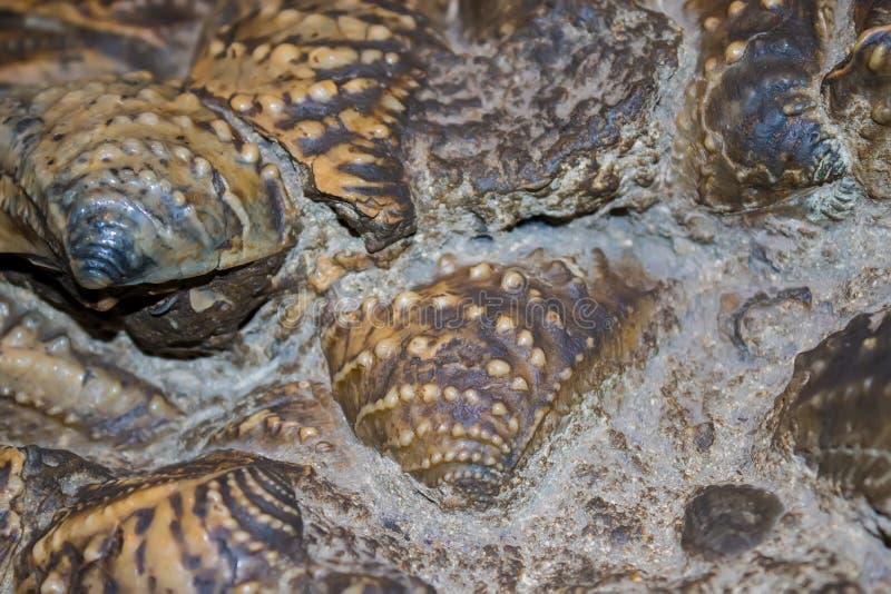 Shells pu in beton stock afbeelding