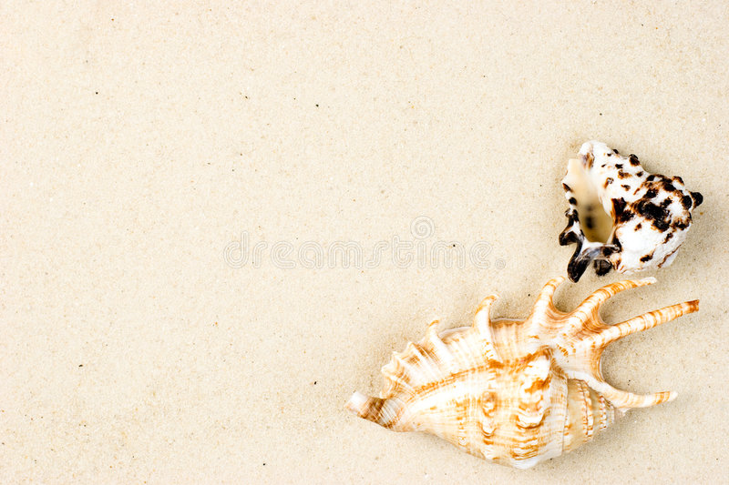 Download Shells on sand stock photo. Image of objects, ocean, shellfish - 7457372