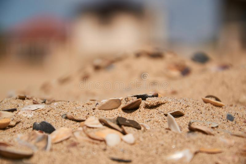 Shells in the sand on the beach background. Selective focus stock photography
