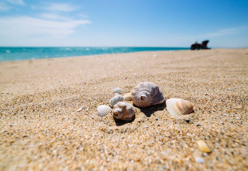 Shells on the sand. stock photos