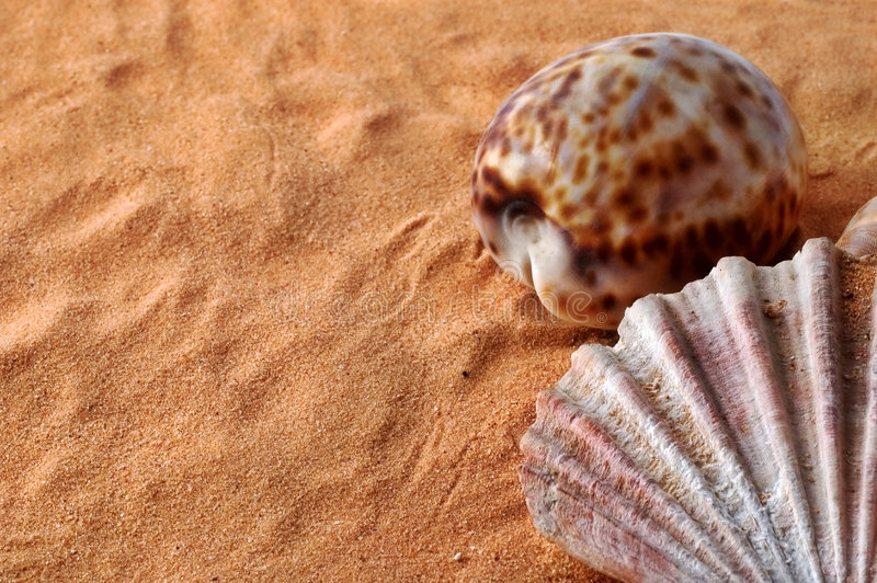 Shells on sand with copy space royalty free stock image