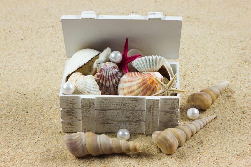 Shells on sand. starfish. treasure sea royalty free stock image