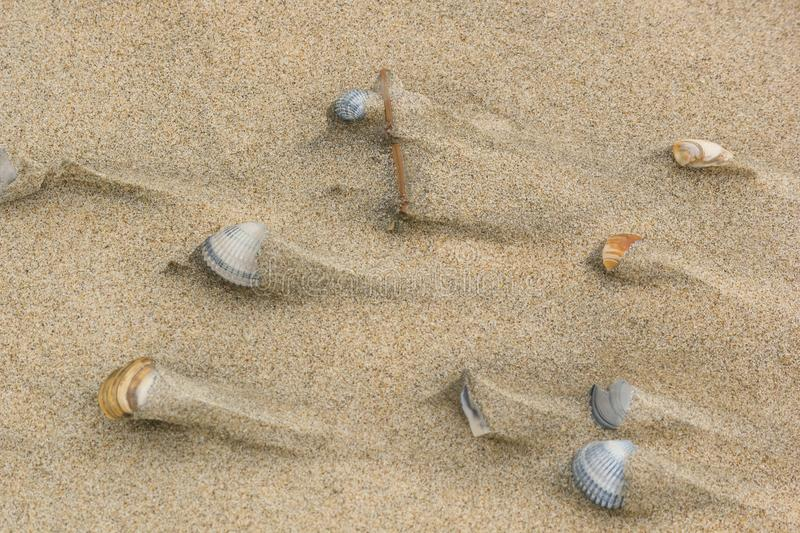 Shells on the sand after the tide, background, texture. Coast of the North Sea stock photos