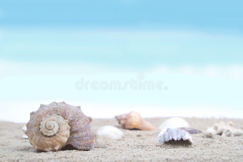 Shells on sandy beach stock photos