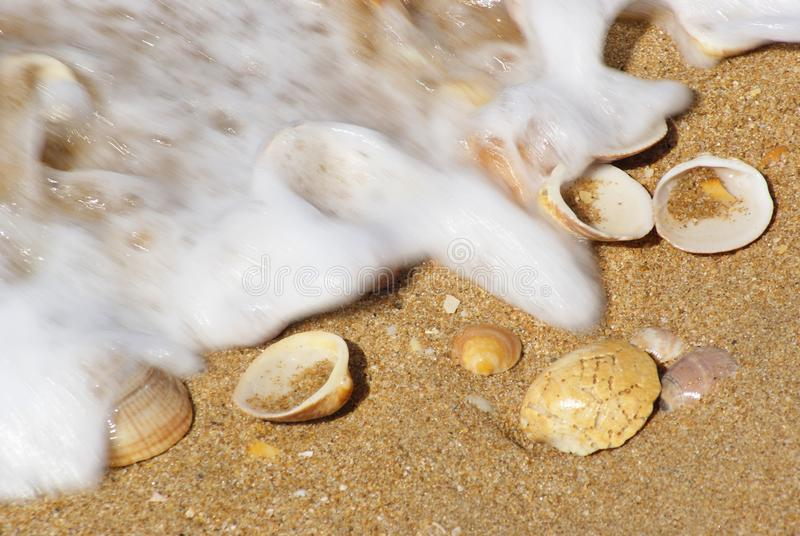 Shells on the sandy beach with foaming wave stock photography