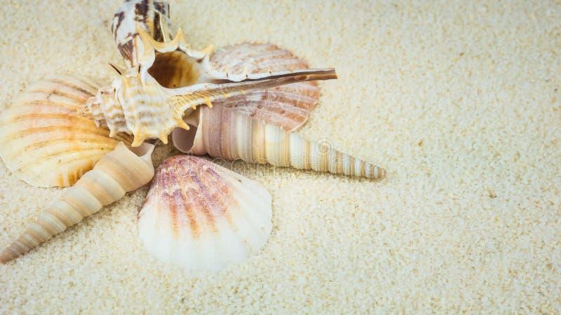 Shells on sandy beach in nice formation stock photos
