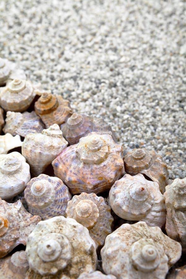 Download Shells stock photo. Image of vertical, beige, ocean, marine - 32681366