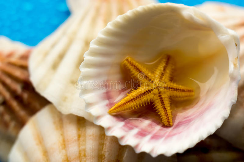 Shells from the sea. Different shells from the sea royalty free stock image
