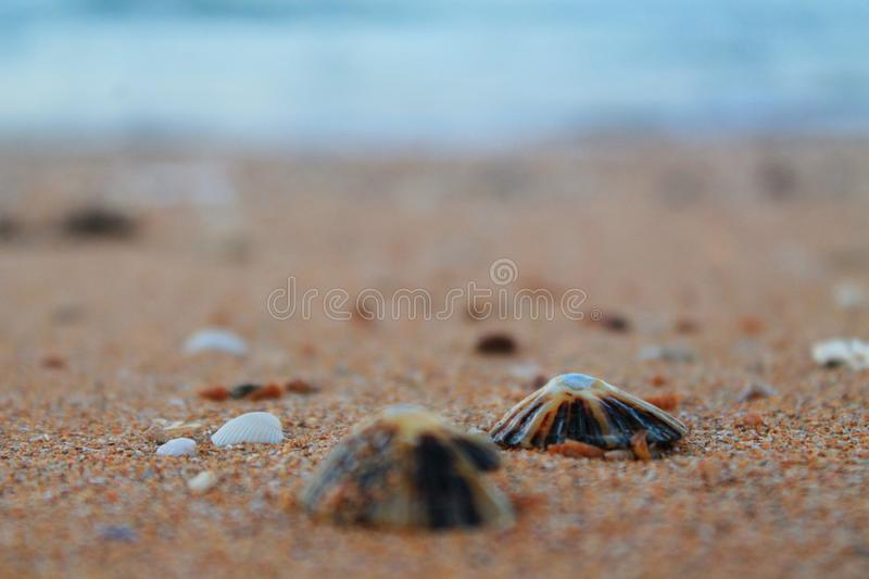 Shells by the sea stock images