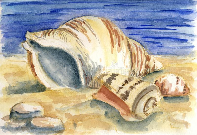 Shells. Seashells at the beach, a unique painting with watercolors stock illustration