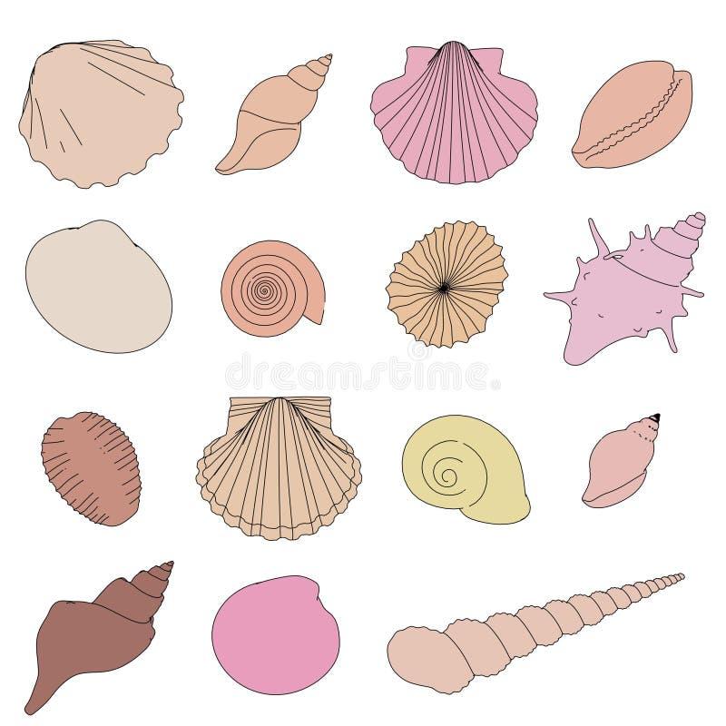 Shells set. 2d cartoon illustration of shells set vector illustration