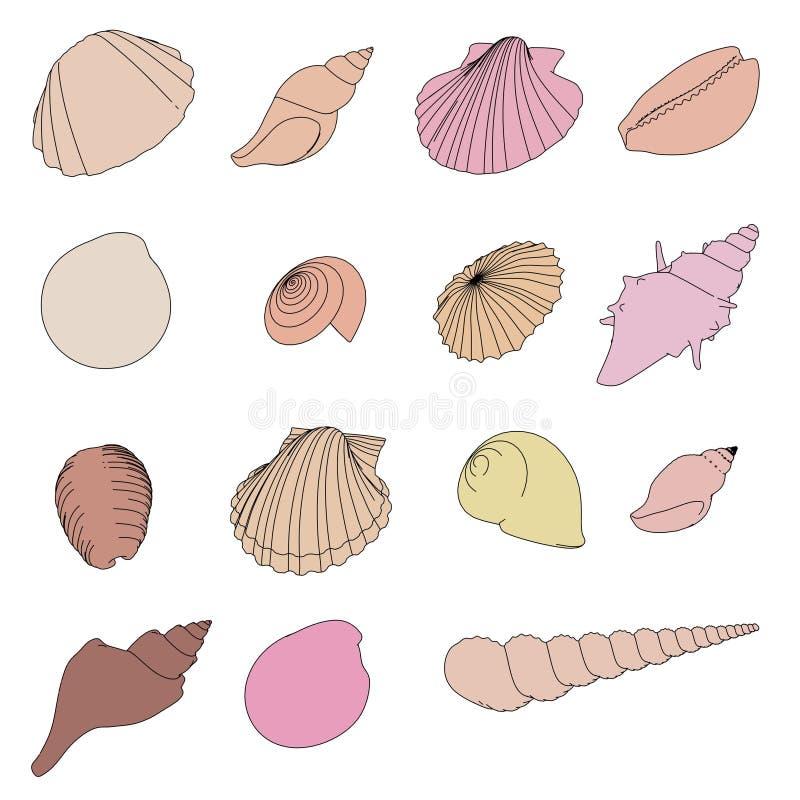 Shells set. 2d cartoon illustration of shells set stock illustration