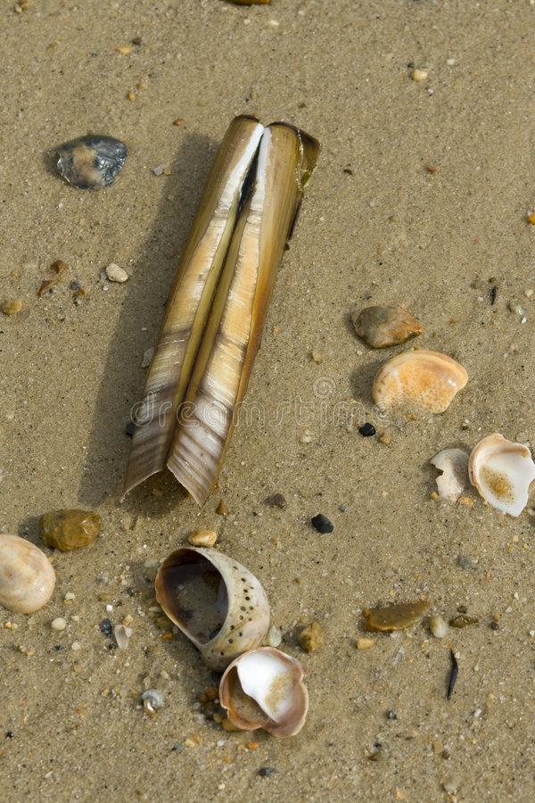 Shells On The Shore Line Royalty Free Stock Photos