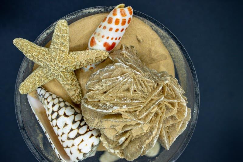 shells sj?stj?rnan Härliga havsvarelser royaltyfri fotografi