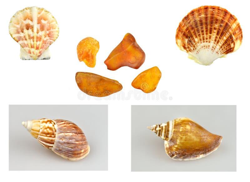 Shells, slakken en amber stock afbeeldingen