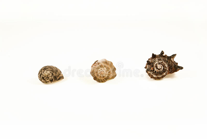 3 shells from small to large royalty free stock image