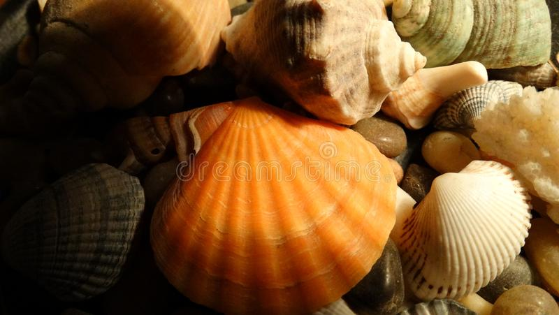 Shells and snails Black Sea. Snails and shells from the black sea, snails and shells from the black sea stock photo