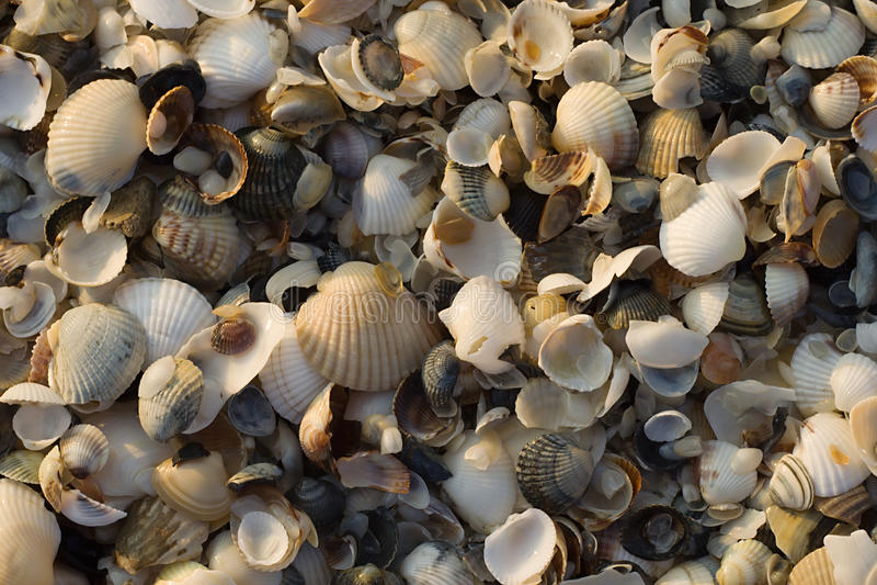 shells soluppgång arkivbilder