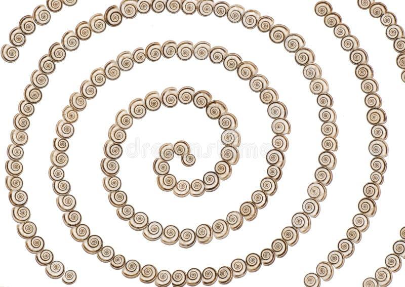 Shells - Spiraal royalty-vrije stock foto