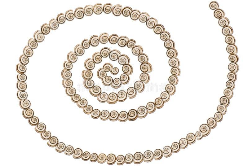 Shells - Spiraal stock afbeelding