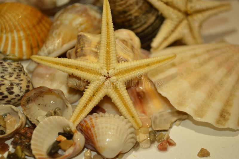 Shells star of sea stock images