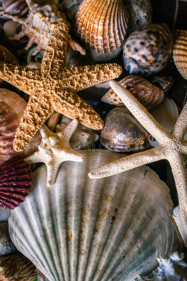 Collection of Shells and Starfish. Shells and Starfish Collected from Beaches stock photography