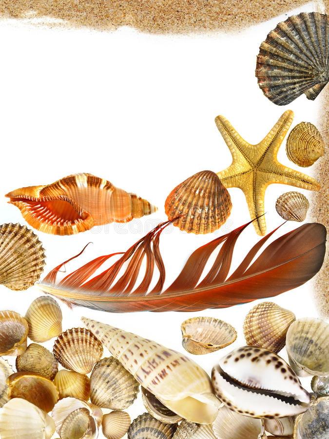 Shells and starfish. Isolated on white royalty free stock images