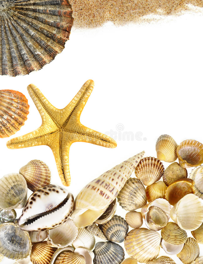 Shells and starfish. Isolated on white stock photos