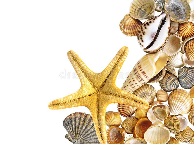 Shells and starfish. Isolated on white stock photo