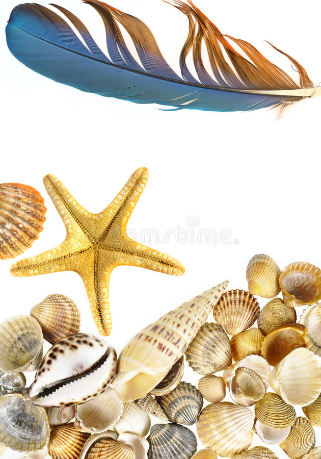 Shells and starfish. Isolated on white royalty free stock photography