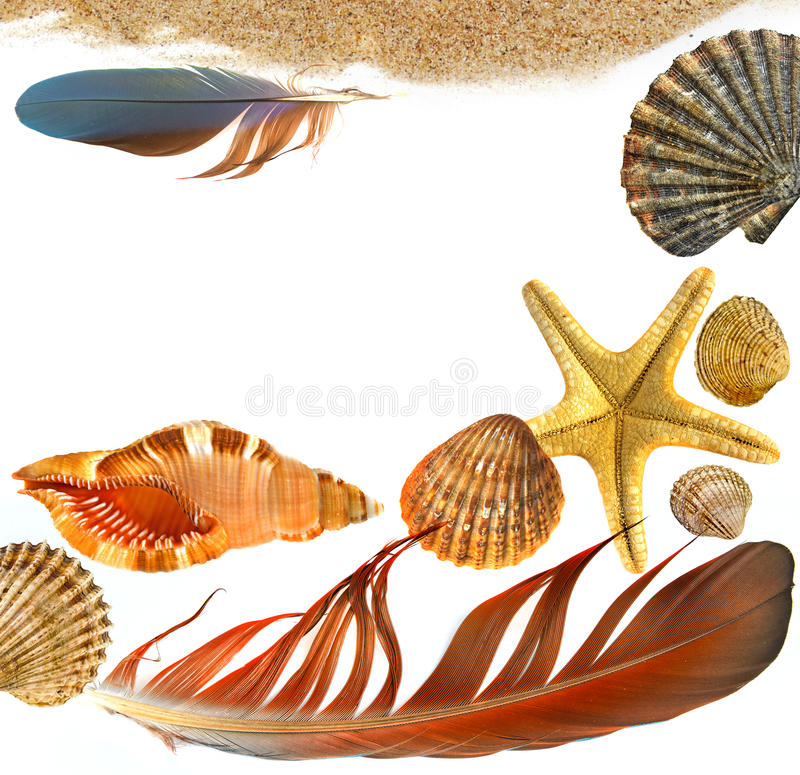 Shells and starfish. Isolated on white background stock image