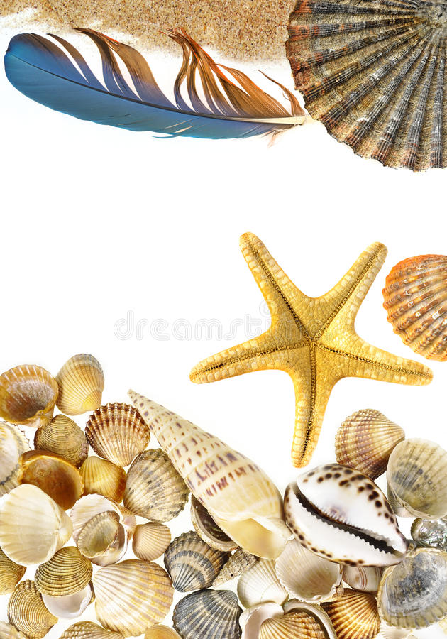 Shells and starfish. Isolated on white background royalty free stock images