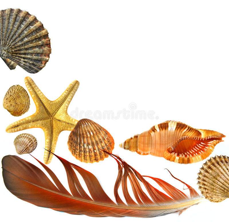 Shells and starfish. Isolated on white background stock images