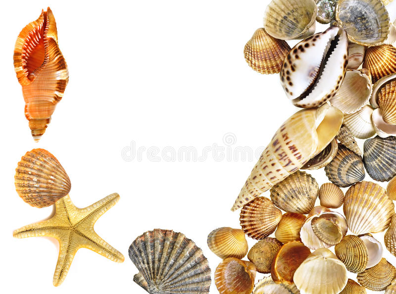 Shells and starfish. Isolated on white background stock photography
