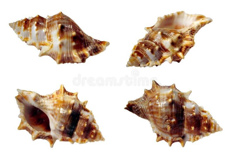 Shells steekproeven stock afbeelding