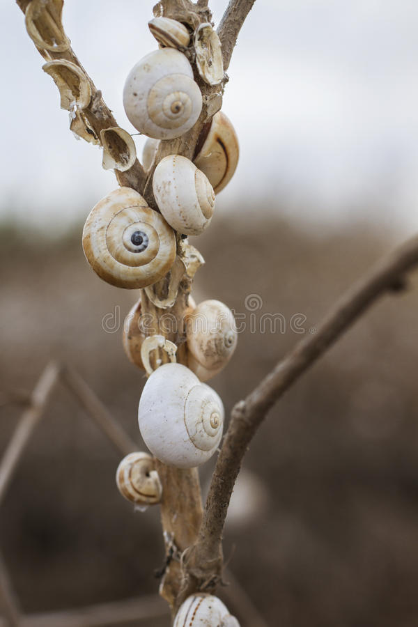 Shells On Stick Stock Photography