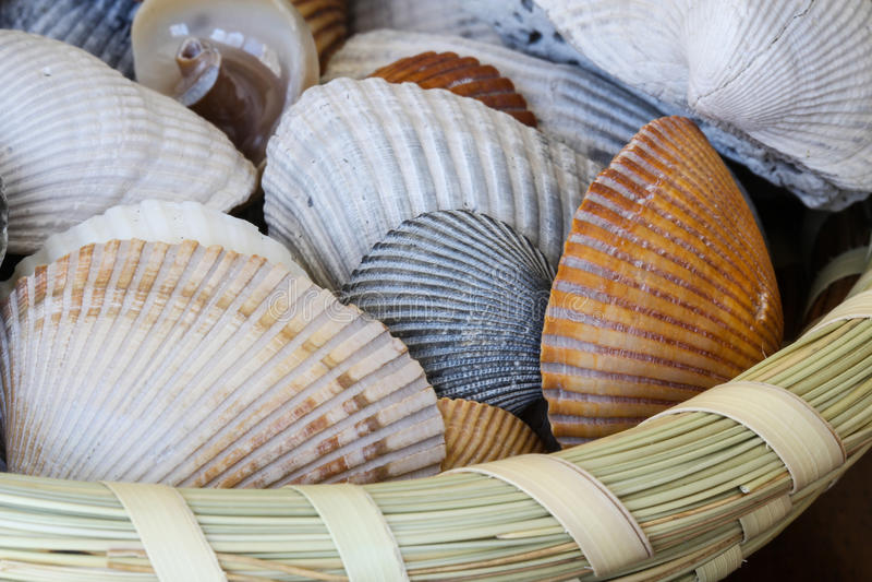 Shells in Sweatgrass-Mand stock foto's