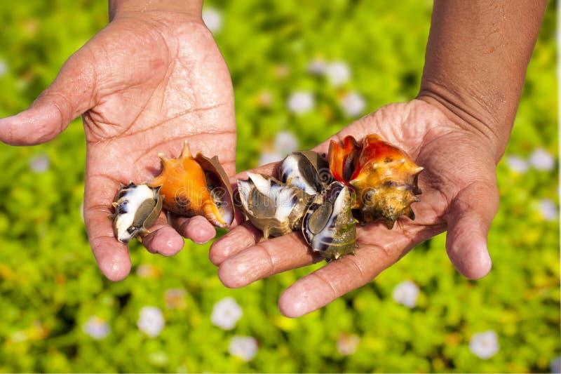 Shells ter beschikking royalty-vrije stock foto