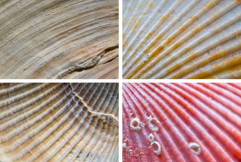 Shells textures stock photo