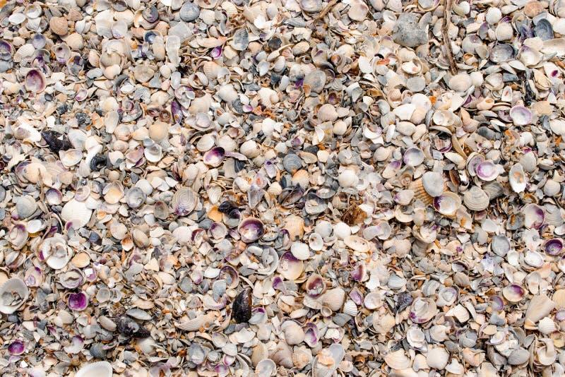 shells textures photo libre de droits