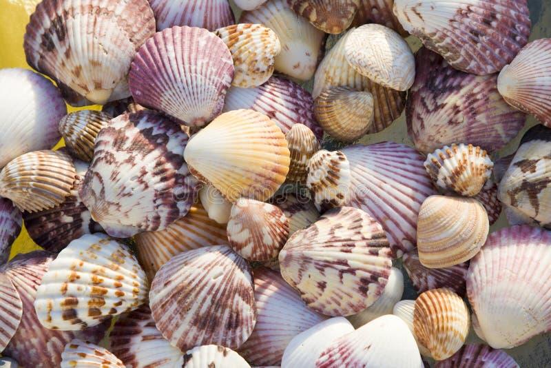 Shells, top view stock photos