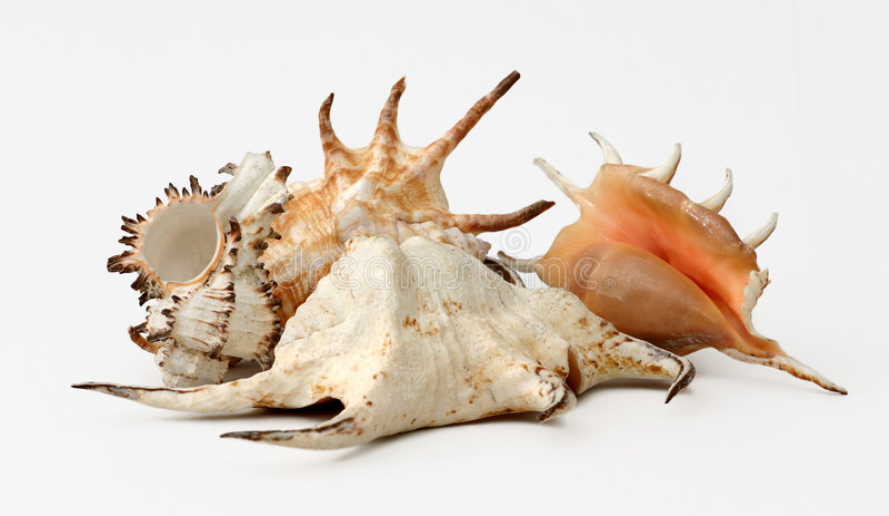 shells unikt arkivfoto