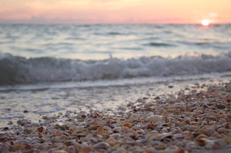 Shells vóór zonsondergang royalty-vrije stock foto's