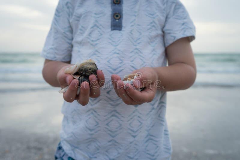 Shells van de jongensholding ter beschikking bij strand bij zonsondergang stock afbeeldingen