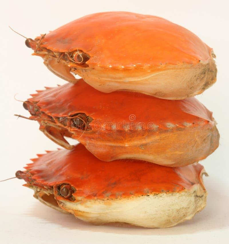Shells van de krab royalty-vrije stock afbeelding
